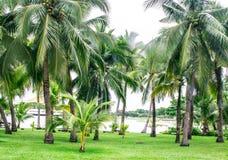 Coconut Garden Royalty Free Stock Photography