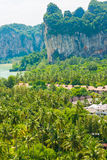 Coconut garden with resort at Railay beach Stock Image