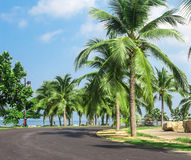 Coconut garden sea. Coconut garden by the sea Stock Photo