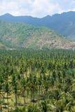 Coconut garden in tropical island Stock Photo