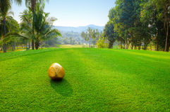 Coconut on golf course Stock Photography
