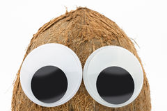 Coconut with googly eyes on white background Royalty Free Stock Image