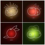 Coconut,Grapefruit ,Peach,Kiwifruit Stock Image