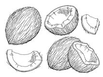 Coconut graphic black white isolated sketch illustration Stock Photo