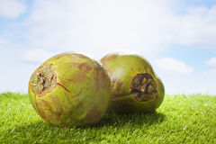 Coconut on grass, sunshine and clouds, copy space Stock Images