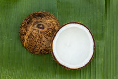 Coconut. On a green background Royalty Free Stock Image