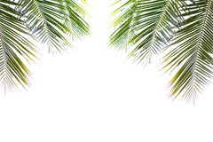 Coconut green beautiful leaves isolated on white background Stock Photos