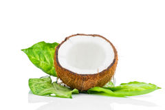 Coconut with green leaf Royalty Free Stock Image