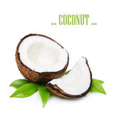 Coconut with green leaves Royalty Free Stock Image