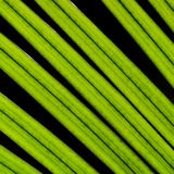Coconut green leaves Stock Photos