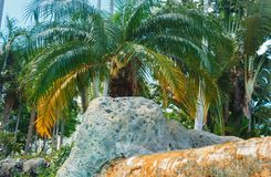 Coconut green palm trees under the sun, tropical exotic beautiful background. Summer, holidays, luxury resort, tourism vacation. Concept royalty free stock photo