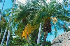 Coconut green palm trees under the sun, tropical exotic beautiful background. Summer, holidays, luxury resort, tourism vacation. Concept stock photo