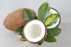 Coconut with green plant Stock Photography