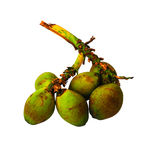 Coconut group color fresh isolate Stock Photography