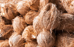 Coconut group raw material for make food and drink, topical frui. T Royalty Free Stock Image