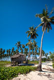 Coconut grove island in the tropics Stock Image