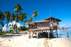 Coconut grove island in the tropics Royalty Free Stock Photos