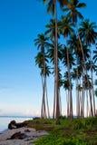 Coconut grove tropical island Royalty Free Stock Photos