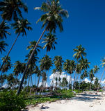 Coconut grove tropical island with blue skies Royalty Free Stock Photo