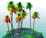 Coconut grove Stock Images