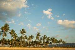 Coconut growing on sand beach Stock Image