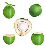 Coconut and haft slice coconut vector design Stock Image