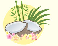 Coconut half Stock Photography