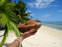 Coconut on a hand royalty free stock photography