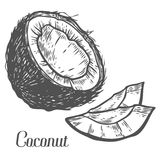 Coconut Hand drawn. Botany vector illustration. Doodle of healthy nutrient food. Coconut engraving sketch etch line. Organic nut on white background. Food Royalty Free Stock Photos