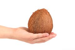 Coconut on hand isolated. White background. Stock Photos