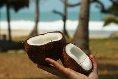 Coconut in hand Royalty Free Stock Photography