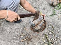 Man use axe to  uncover coconut. Coconut  has cut by black axe Royalty Free Stock Image