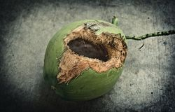 Green coconut with hole on ground. Coconut with hole gnawed by squirrel royalty free stock image