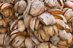 Coconut husk Stock Image