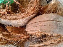 Coconut husk Stock Photos