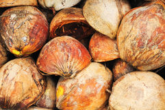 Coconut husks Stock Images