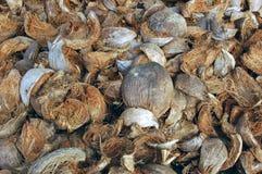 Coconut husks Stock Images
