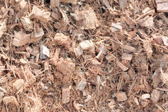 Coconut husks minced for mix soil in cultivation. Stock Photography