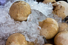 Coconut on ice Royalty Free Stock Photos