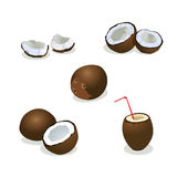 Coconut  illustration. Isolated coconut  illustration. Pieces of coconut Stock Image
