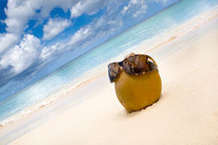 Free Coconut In Sun Glasses On The White Sand Beach Stock Image - 12594611
