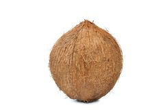 Coconut isolated Stock Photography