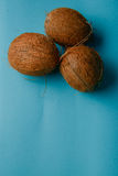 Coconut isolated on blue Background Royalty Free Stock Image