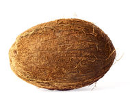 Coconut isolated. Nice exotic coconut isolated on white background Royalty Free Stock Images