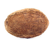 Coconut isolated. Nice exotic coconut isolated on white background Stock Photos