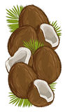 Coconut isolated, Vector, nut composition. Stock Photo