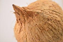 Coconut. Isolated on white background Stock Image