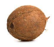 Coconut Royalty Free Stock Photo