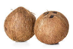 Coconut isolated on white Stock Image