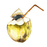 Coconut isolated on white background. Tropical set, Watercolor sketch object Stock Images